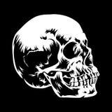 Cráneo 001 Fotografía de archivo