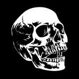 Cráneo 002 Fotografía de archivo
