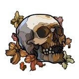 Cráneo abstracto del esquema con las flores Imagenes de archivo