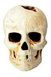 Cráneo adentro fas Imágenes de archivo libres de regalías