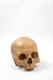 Cráneo aislado Foto de archivo libre de regalías