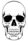 Cráneo aislado en el fondo blanco Imágenes de archivo libres de regalías