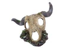 Cráneo animal aislado aislado en blanco Fotografía de archivo libre de regalías