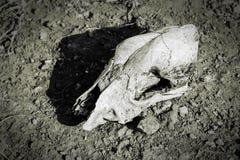Cráneo animal, blanco y negro Imágenes de archivo libres de regalías