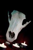 Cráneo animal en el círculo de velas - un ritual mágico Fotos de archivo