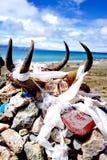 Cráneo animal en tótem Foto de archivo libre de regalías