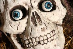 Cráneo asustadizo Imagen de archivo libre de regalías