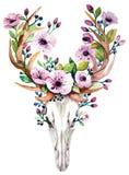Cráneo brillante de los ciervos del vector de la acuarela con las flores libre illustration