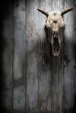 Cráneo con los cuernos del animal Foto de archivo libre de regalías