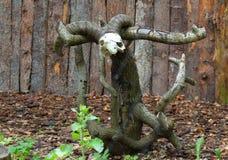 Cráneo con los cuernos en un árbol aserrado foto de archivo libre de regalías