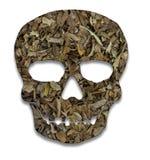 Cráneo cortado de tabaco Fotografía de archivo