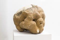 Cráneo cubierto con el settle de la estalagmita, Alajar, España imágenes de archivo libres de regalías