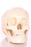 Cráneo en el fondo blanco Fotografía de archivo