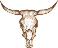 Cráneo de Bull Foto de archivo libre de regalías
