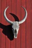 Cráneo de Bull sobre la madera roja Imagen de archivo libre de regalías