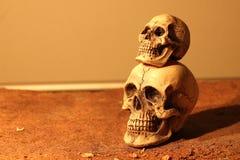Cráneo de dos seres humanos Imágenes de archivo libres de regalías