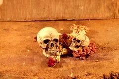 Cráneo de dos seres humanos Foto de archivo libre de regalías