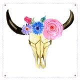 Cráneo de la acuarela con las flores en estilo del vintage Foto de archivo libre de regalías