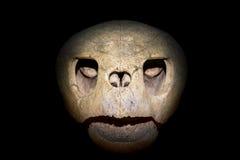 Cráneo de la tortuga Fotografía de archivo libre de regalías