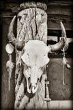 Cráneo de la vaca Fotografía de archivo