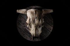 Cráneo de la vaca Foto de archivo libre de regalías
