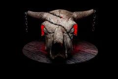 Cráneo de la vaca Imagenes de archivo