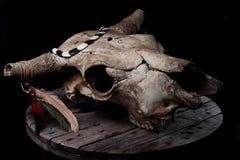Cráneo de la vaca con las plumas Fotografía de archivo libre de regalías