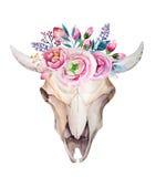 Cráneo de la vaca de la acuarela con las flores y las plumas Foto de archivo libre de regalías