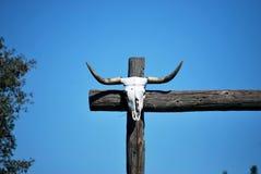 Cráneo de la vaca en el poste de la cerca Fotografía de archivo libre de regalías