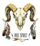 Cráneo de las ovejas en el fondo blanco Imagen de archivo libre de regalías