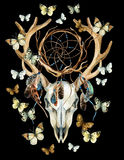 Cráneo de los ciervos Cráneo animal con el dreamcather y la mariposa Imagenes de archivo