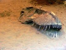 Cráneo de T-Rex apenas fuera de la tierra en el parque de la extinción en Italia Imagen de archivo