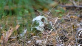 Cráneo de un animal almacen de video