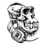 Cráneo de un gorila con los auriculares fotografía de archivo libre de regalías