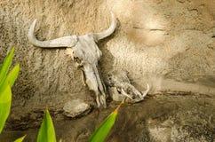 Cráneo del ñu del ñu, parque Suráfrica de Kruger Imagenes de archivo