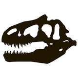 Cráneo del Allosaurus Foto de archivo libre de regalías