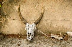 Cráneo del antílope, parque Suráfrica de Kruger Imagenes de archivo