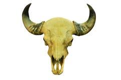 Cráneo del búfalo Fotografía de archivo libre de regalías