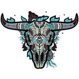 Cráneo del búfalo fresco Imágenes de archivo libres de regalías