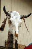 Cráneo del buey Fotos de archivo libres de regalías