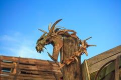Cráneo del dinosaurio imágenes de archivo libres de regalías
