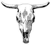 Cráneo del ganado. Fotografía de archivo