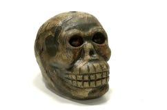 Cráneo del mono foto de archivo libre de regalías