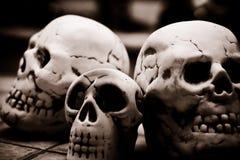 Cráneo del sapience del homo Imagen de archivo