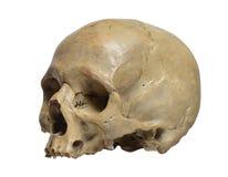 Cráneo del ser humano fotografía de archivo libre de regalías