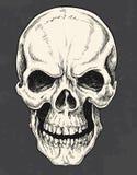Cráneo dibujado mano de la pluma y de la tinta