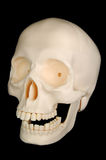 Cráneo divertido Imagen de archivo libre de regalías
