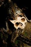 Cráneo en armadura de placa con la espada Fotos de archivo