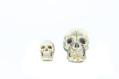 Cráneo en blanco Imagenes de archivo