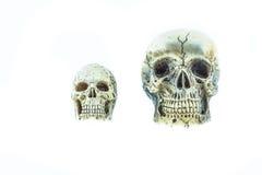 Cráneo en blanco Imagen de archivo